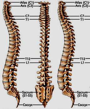 Wovon der Rücken unter dem Schulterblatt links weh tut